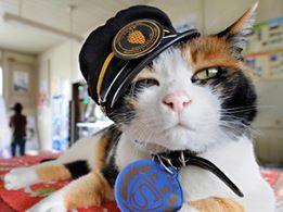 Tama, o pisică cu carieră